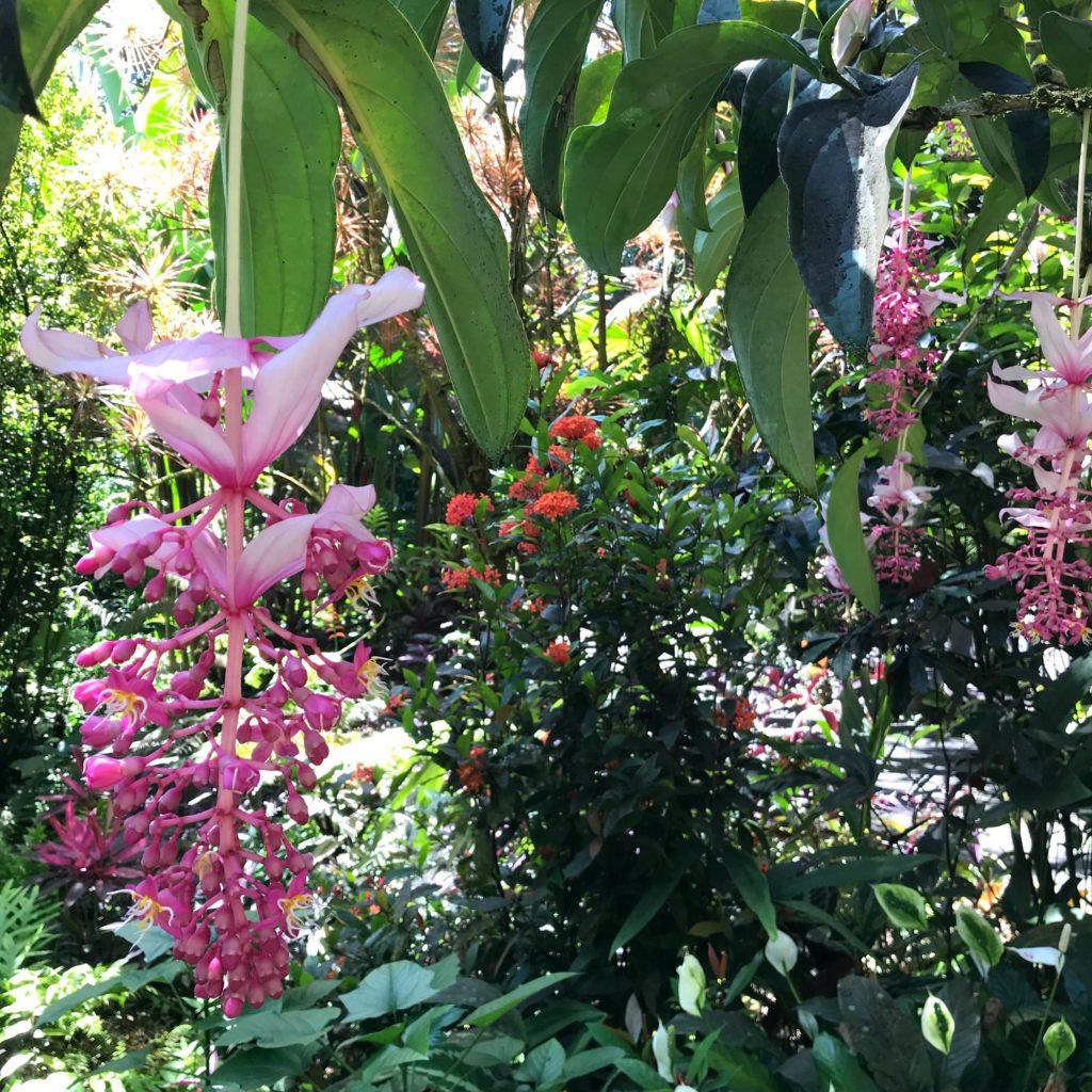 Jardin botanique d'Hilo Big Island